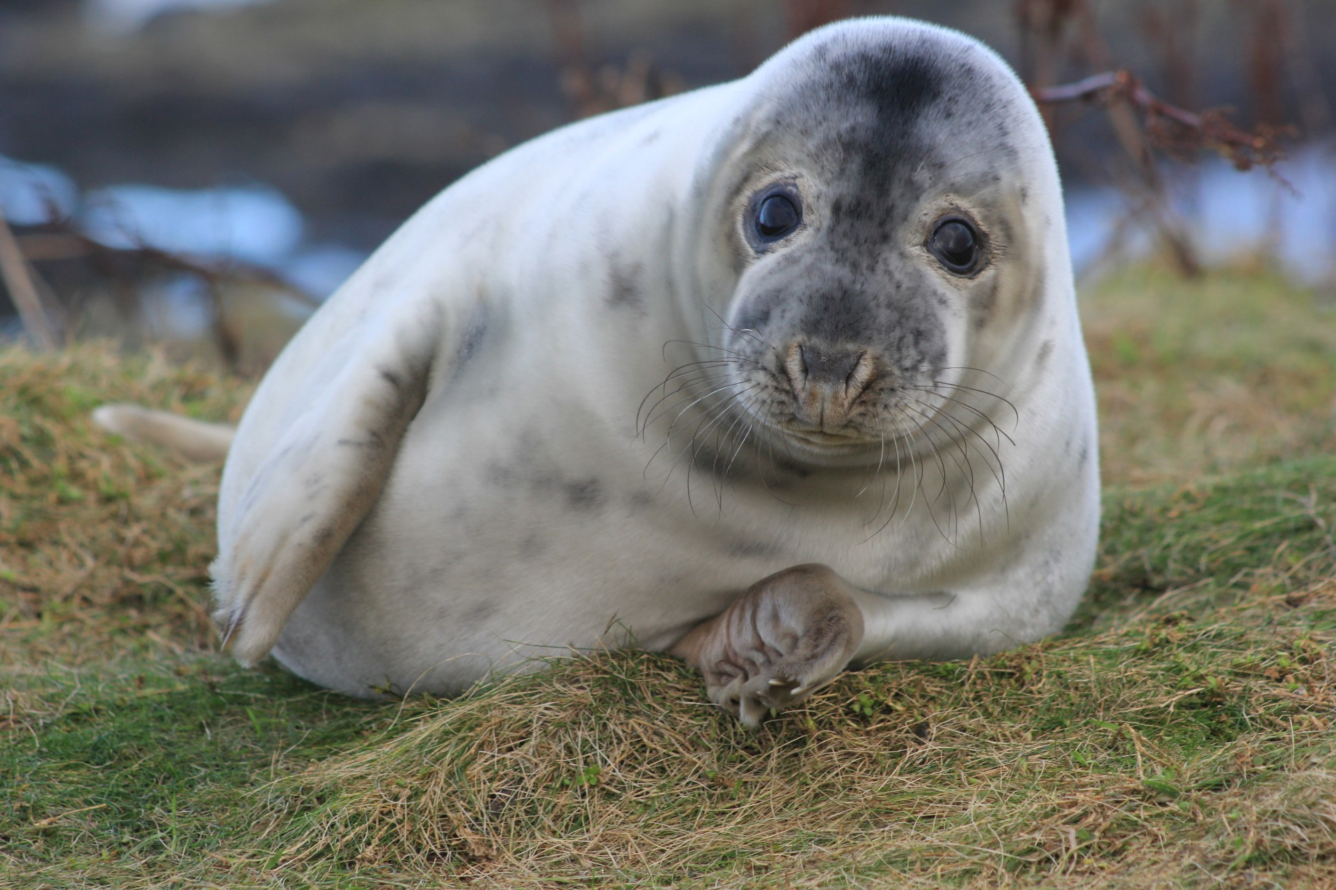 Toxic chemical study shows seal pups at risk despite ban